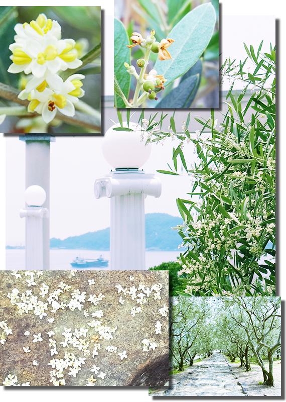 Olive Flower 2015